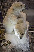 Effigy of a white polar bear