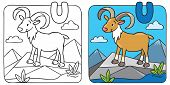 stock photo of ram  - Coloring picture or coloring book of funny wild urial or ram coloring book - JPG
