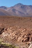 Dry Riverbed With Cacti, Atacama Desert, Chile