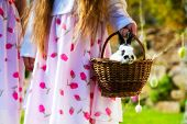 stock photo of easter eggs bunny  - Children on Easter egg hunt in the spring on a meadow - JPG
