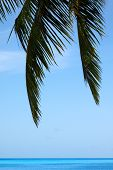 stock photo of dhoni  - Palm tree in the Maldives over looking the ocean - JPG