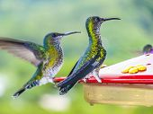 picture of hummingbirds  - hummingbirds in Brazil at a feeding station - JPG