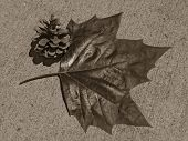 Leaf And Con - Sepia