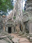image of mahabharata  - Banyan tree over old ruin temple  - JPG