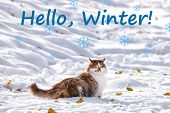 Adorable cat on snow. Text HELLO, WINTER on background poster
