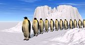 Penguins March
