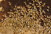 image of bee keeping  -  Colony of bees - JPG
