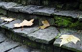 A Few Leaf On Grey Steps In Autumn
