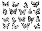 Silhouettes Of Butterflies. Black Pictures Of Funny Butterflies. Insect Butterfly Black Silhouette,  poster
