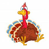 Cartoon Turkey Bird Character. Vector Isolated On White poster