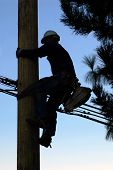 stock photo of utility pole  - Silhouette of an electrician climbing a newly installed utility pole - JPG