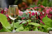 Glass of white wine set in a tropical garden