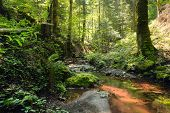 Red Creek In Rainforest. Stream In Rainforest Nature. Rainforest Stream. Nature. Stream. Natural Env poster