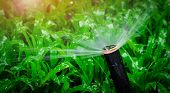 Automatic Lawn Sprinkler Watering Green Grass. Sprinkler With Automatic System. Garden Irrigation Sy poster