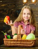 Harvest Festival Concept. Kid Girl Near Basket Full Of Fresh Vegetables Harvest Rustic Style. Farm M poster
