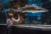 Young Girl Standing Outstretched Against Aquarium Glass Fascinated By The Shark. poster