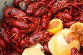 picture of crawdads  - Closeup of a Crawfish Boil - JPG