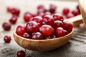A Lot Of Fresh Cranberries In A Wooden Spoon. Place For Text. Vitamin Berry For Winter poster