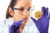 young attractive laboratory assistant check petri dish with agar and bacterium on it, isolated on wh
