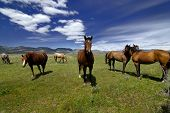 Ansicht von Pferden mit weißen und grauen Wolken in blauen Himmel