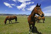 Ansicht von Pferden mit weißen und grauen Gewitterwolken in blauen Himmel