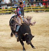 Wild Bull Ride