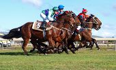 HASTINGS- June 27: Horses Just out of the Gates at the Hawke's Bay Racing Winter Meet Hastings New Z