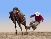 stock photo of bronco  - Cowboy bucked of a bucking Bronco isolated with path - JPG
