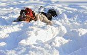 stock photo of ruddy-faced  - funny  teenager  girl lying in deep  snow - JPG