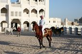 DOHA - FEBRUARY 3: A rider shows off a pure-bred Arab stallion, with the State of Qatar arms, in cental Doha. The city is to be the UNESCO Arab Capital of Culture, 2010.