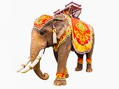 Elephant Has Beautiful And Large Isolated On White Background. Colorful Painted Elephant Head ,decor poster