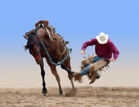 picture of bucking bronco  - Cowboy bucked of a bucking Bronco isolated with path - JPG