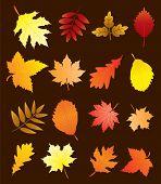 Vector Fall Leaves Set