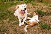 image of dry grass  - dog and cat lying on the dry grass - JPG