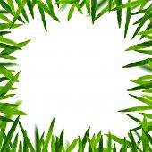 Grass Frame In White Background