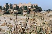 Burdock And Fortress