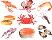 seafood Illustration set