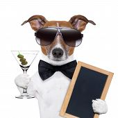 stock photo of dog birthday  - party dog toasting with a martini glass with olives - JPG