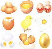 eggs illustration set