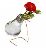 Bulb Vase With Roses