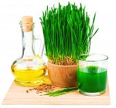 picture of germs  - Wheatgrass juice with sprouted wheat and wheat germ oil on the mat isolated on white background - JPG