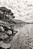 image of montre  - Flowers and trees near Geneva lake Montreux - JPG