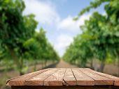 Vine Fields