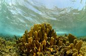 Scenic Underwater Coral In Tropical Destination poster