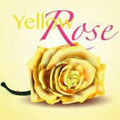 Yellow Vector Rose on white and yellow Background invitation card