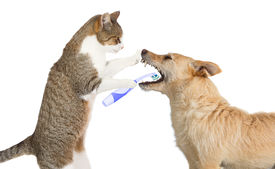 pic of animal teeth  - Cute little cat helping out a friend standing up on its hind legs holding a toothbrush cleaning a dogs teeth which is standing there obligingly with its mouth wide open isolated on white - JPG