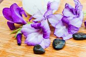 picture of gladiola  - Spa theme with lavender colored gladiola flowers and stones - JPG