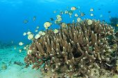 stock photo of damselfish  - Coral and Fish  - JPG