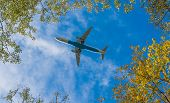 Plane beneath trees