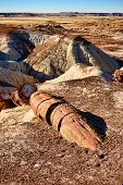 foto of petrified  - Alien landscape and petrified tree in Arizona petrified forest